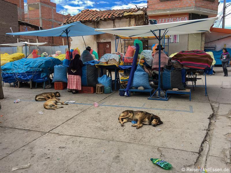 Schlafende Hunde und Markt in Copacabana in Bolivien