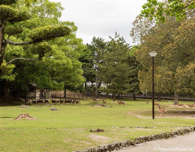 Rennende Hirsche im Narapark