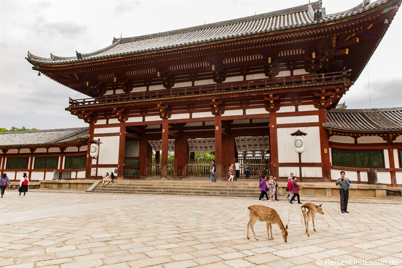 Hirsche beim Nandaimon in Nara