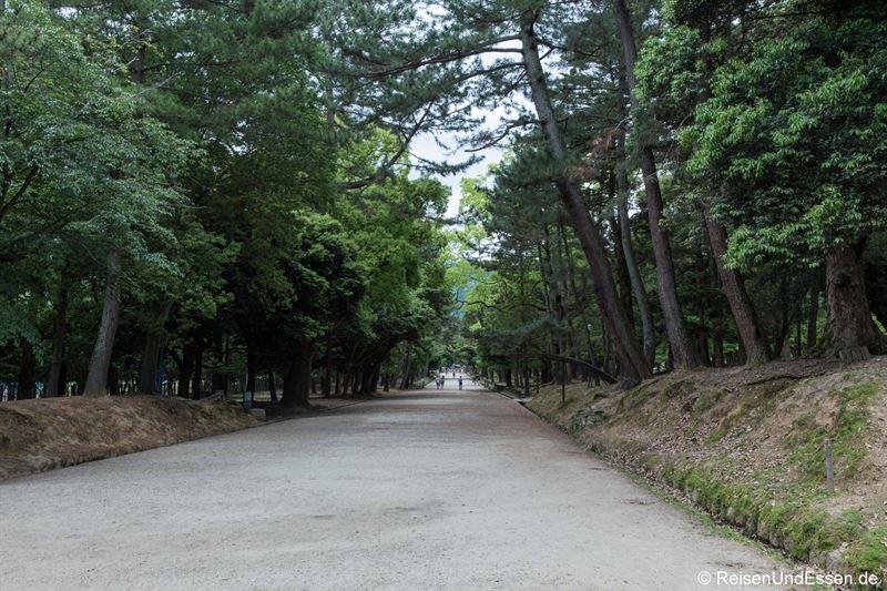 Weg im Narapark zu den Hirschen