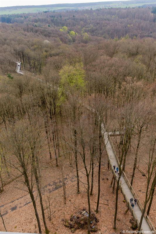 Blick vom Turm auf den Baumwipfelpfad Steigerwald