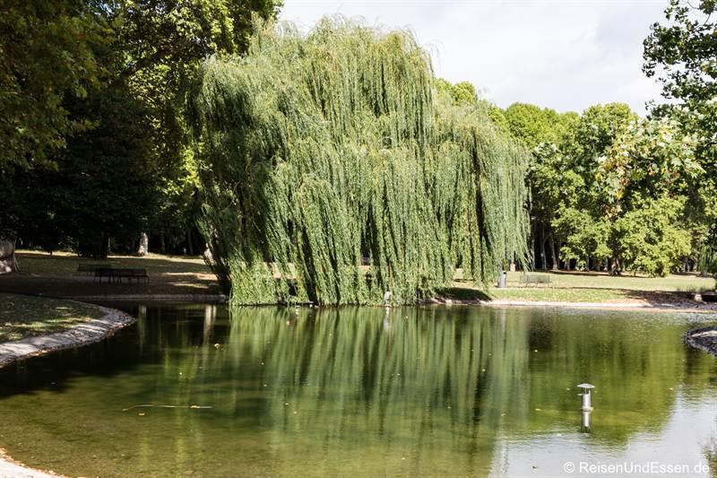 Trauerweide im unteren Schlossgarten in Stuttgart