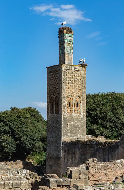 Minarett in Chellah mit Störchen