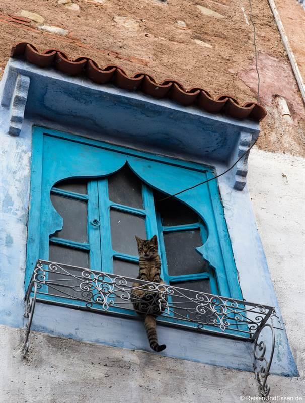 Katze am Fenster am frühen Morgen