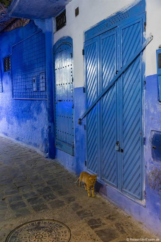 Katze bei Nacht in einer Gasse in Chefachaouen