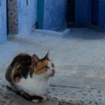 Chefchaouen – Blaue Stadt in Marokko