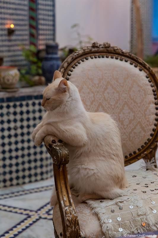 Katze im Riad Amor in Fes