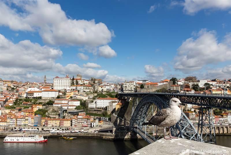 Möwe vor der Ponte Luis I in Porto