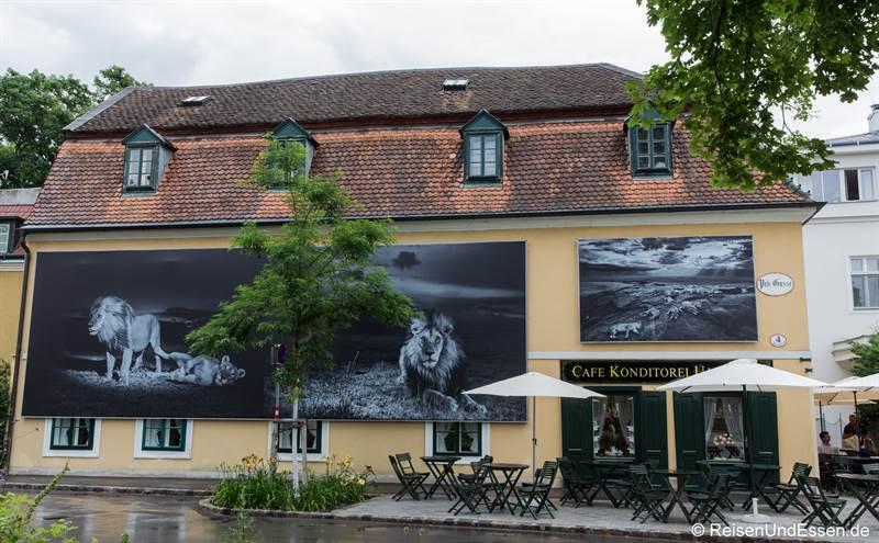 Tierfotografie von Michael Nichols beim Festival La Gacilly in Baden bei Wien