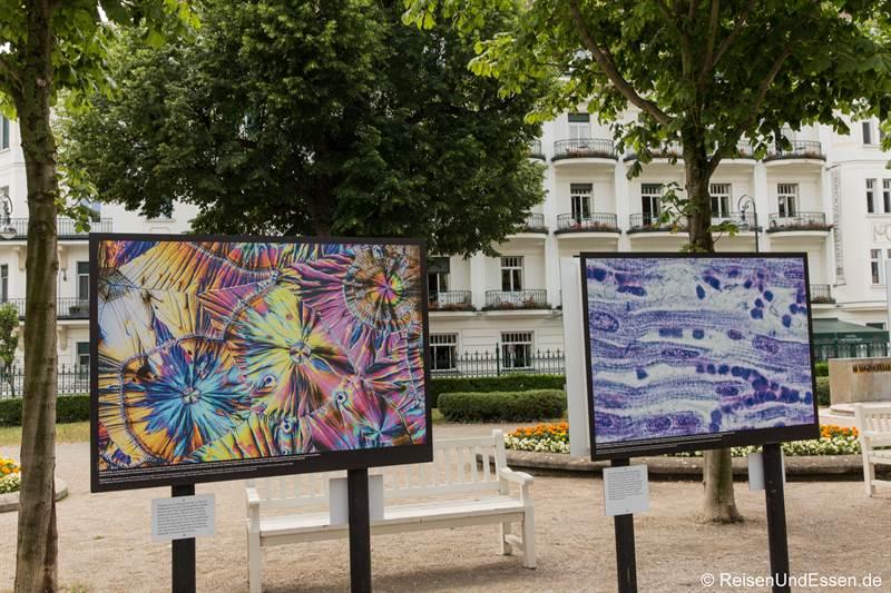 Motive aus dem Mikroskop von Spike Walker beim Festival La Gacilly