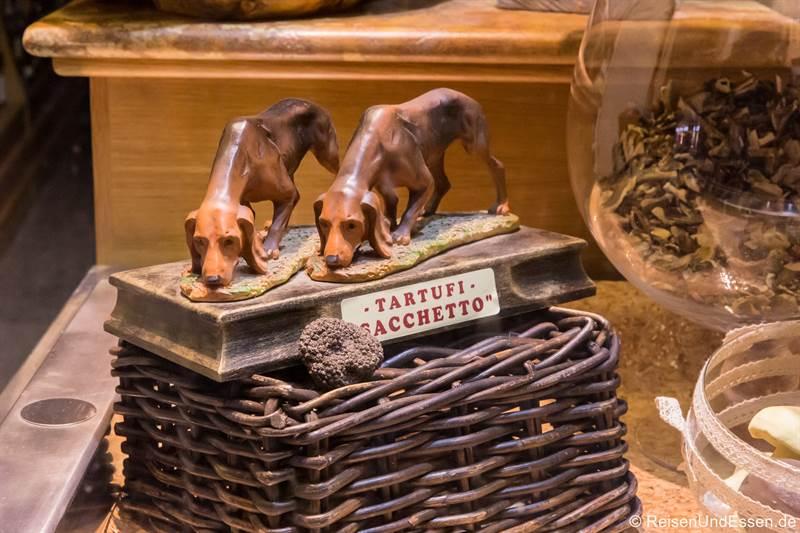 Trüffelhunde in einem Schaufenster in Alba