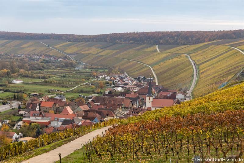 Herbstliche Weinberge oberhalb von Escherndorf