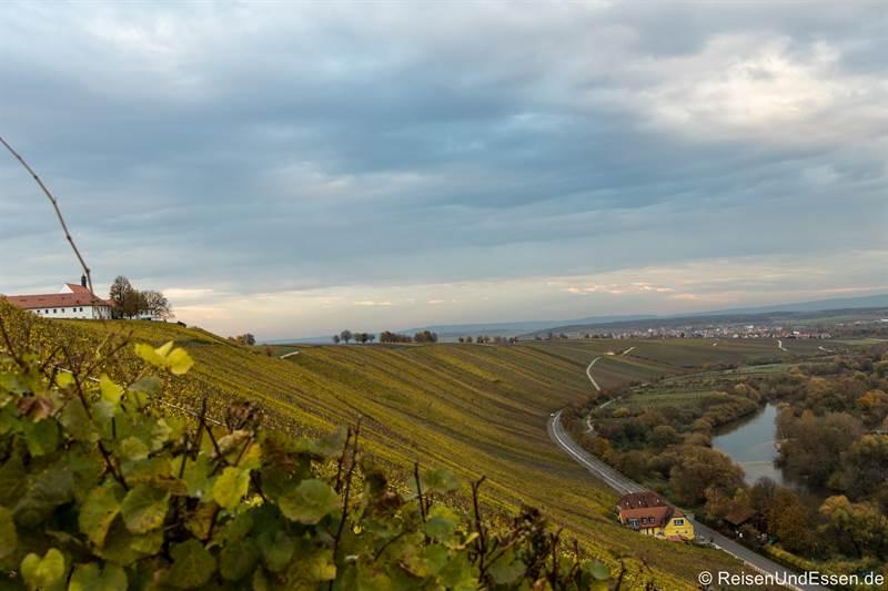 Weinhang im Herbst und Vogelsburg