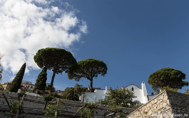 Pinien auf dem Weg nach Ravello an der Amalfiküste