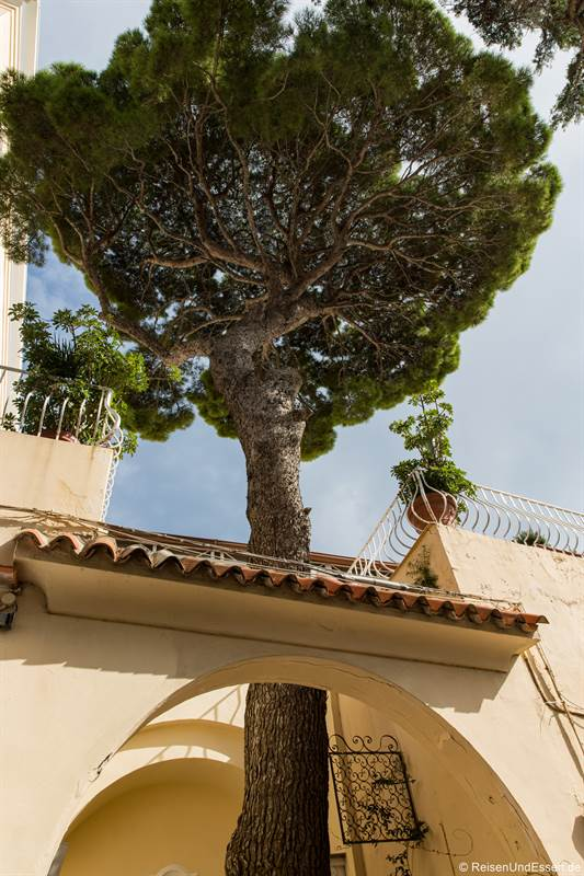 Pinie hinter dem Torbogen in Capri
