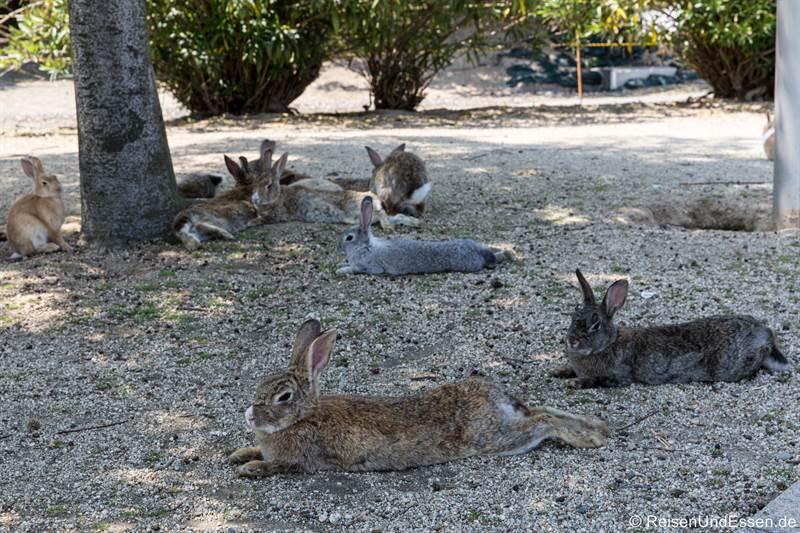 Entspannte Hasen auf der Insel