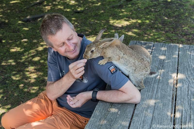 Kaninchen auf der Schulter in Okunoshima