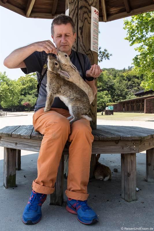 Gierige Kaninchen schnappen nach dem Futter