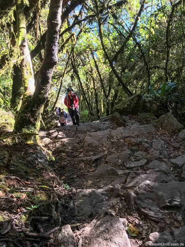Aufstieg durch den Wald zum Montaña