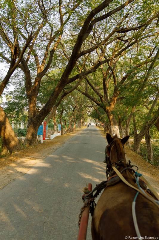 Fahrt mit der Pferdekutsche in Inwa