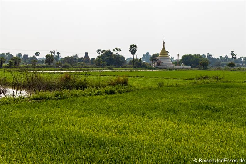 Reisfeld in Inwa bei Mandalay