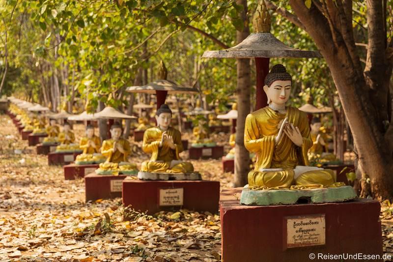 10.000 Buddha unter heiligen Feigenbäumen