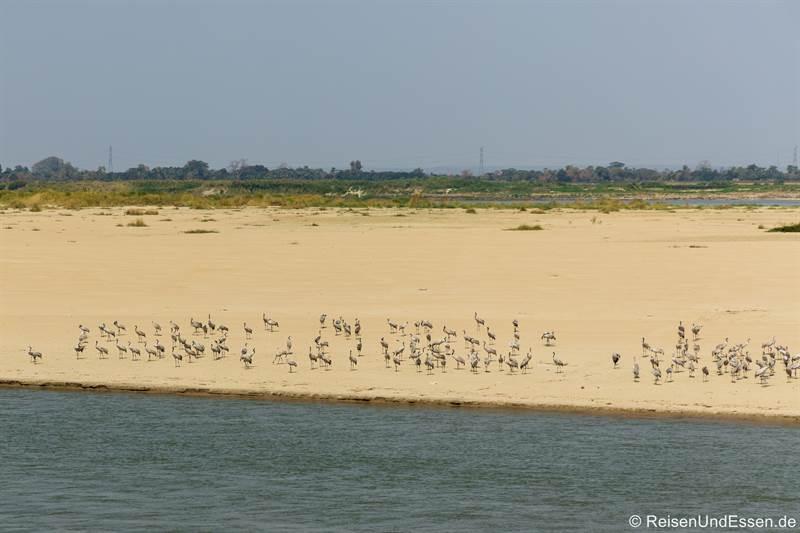 Vögel auf einer Sandbank im Irrawaddy
