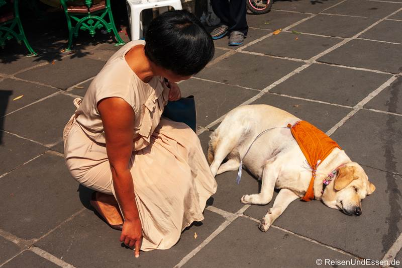 Hund in der Sonne beim Wat Arun