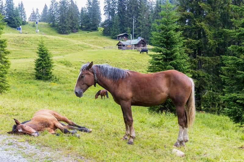 Pferde bei der Kuhalm