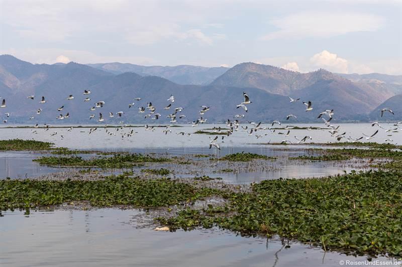Vögel über dem Inle-See