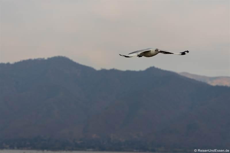 Vogel über dem Inle-See