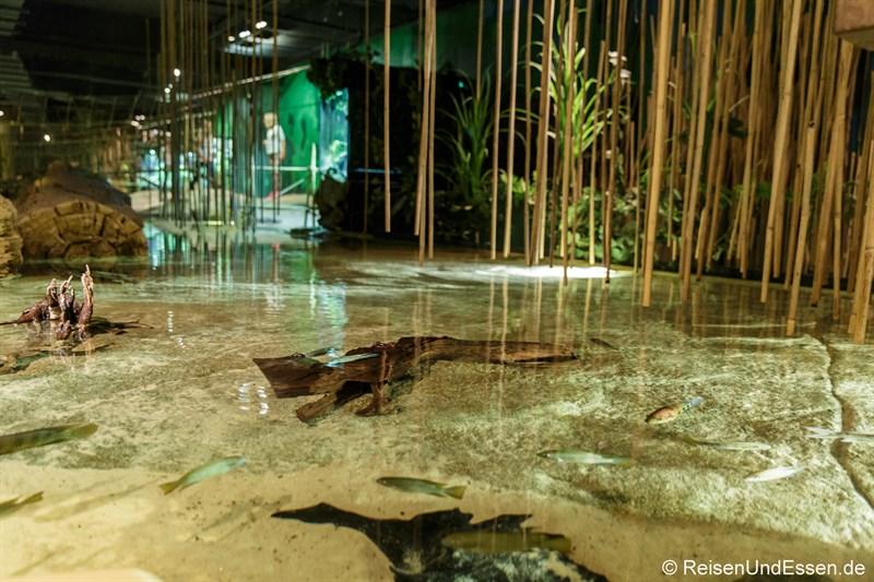 Flusslandschaft des Korup Nationalparks in Kamerun - Klimahaus Bremerhaven
