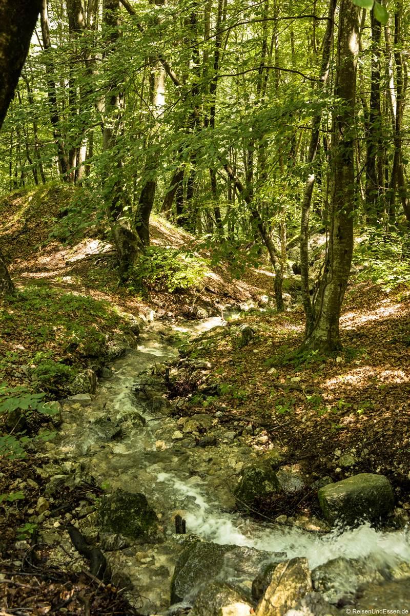 Bach durch den Wald an der Ponalestraße von Riva del Garda zum Ledrosee