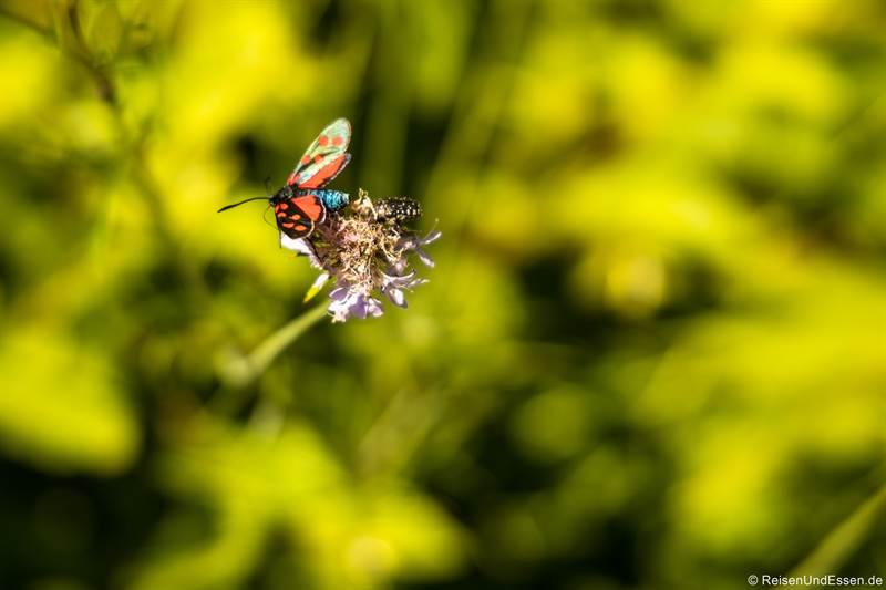 Insekt auf der Ponalestraße von Riva del Garda zum Ledrosee
