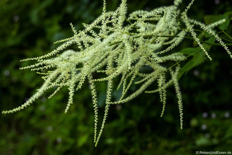 Pflanze an der Ponalestraße von Riva del Garda zum Ledrosee