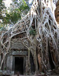 Ta-Prohm-Tempel in Angkor Wat in Kambodscha